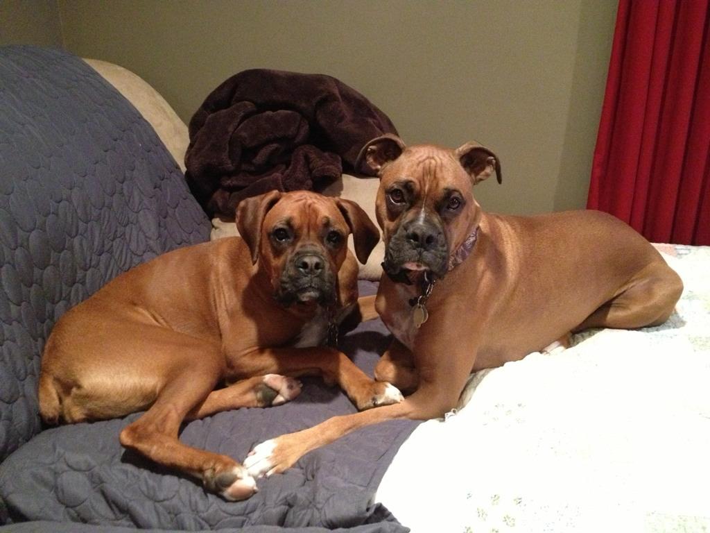 Jaxon and Belah Snuggle Buddies!-imageuploadedbypg-free1358550897.947643.jpg