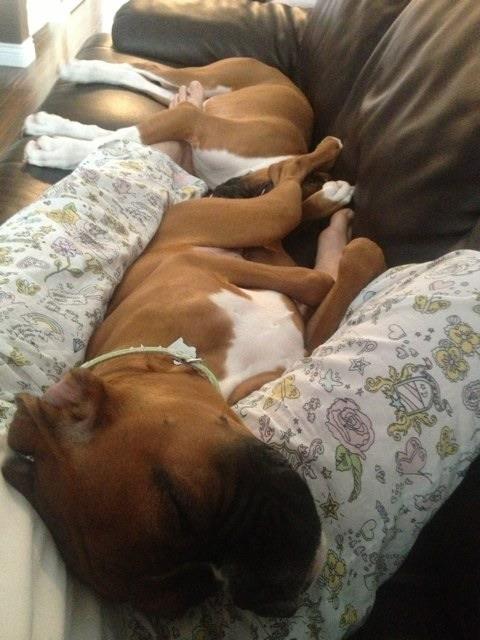 My gorgeous babies!-imageuploadedbypg-free1359049009.954770.jpg
