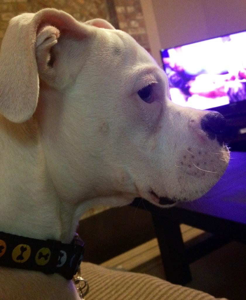 Frankie's 5 months-imageuploadedbypg-free1359602249.443712.jpg