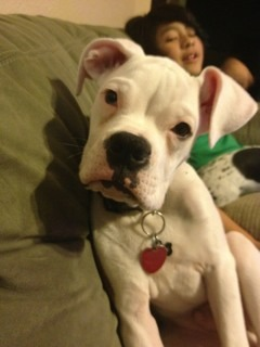 Frankie's 5 months-imageuploadedbypg-free1359602289.450716.jpg