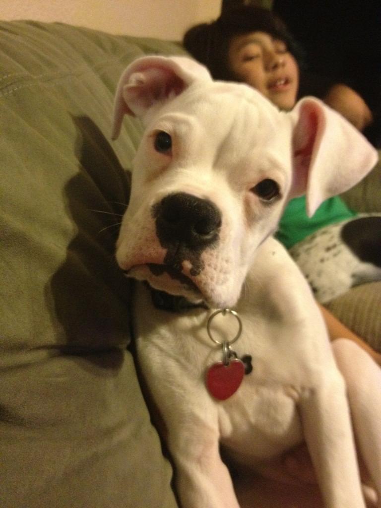 Frankie's 5 months-imageuploadedbypg-free1359602302.378452.jpg