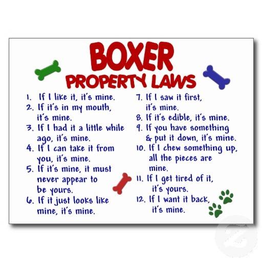 Hunting Dog Poems Boxer Dog Poems