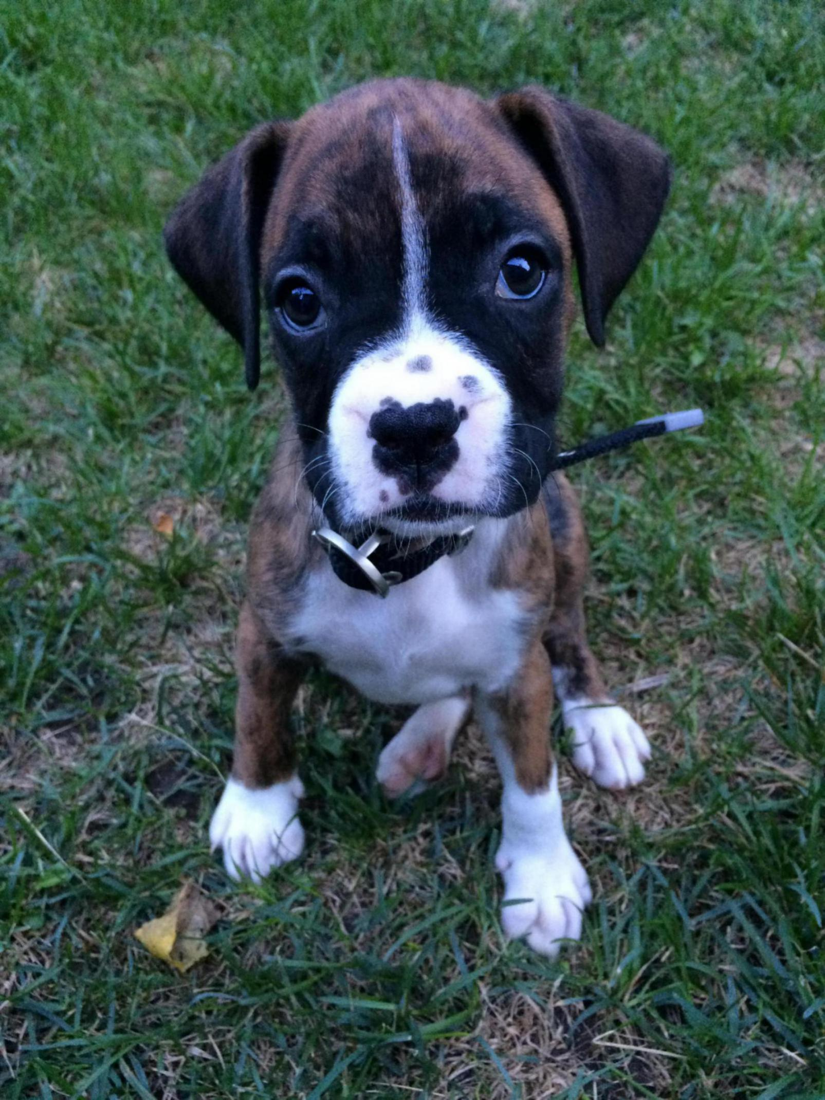 Your favourite picture of your Boxer!-img_4242_1508880490765.jpg