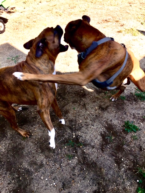 Doggie day care-img_6892.jpg