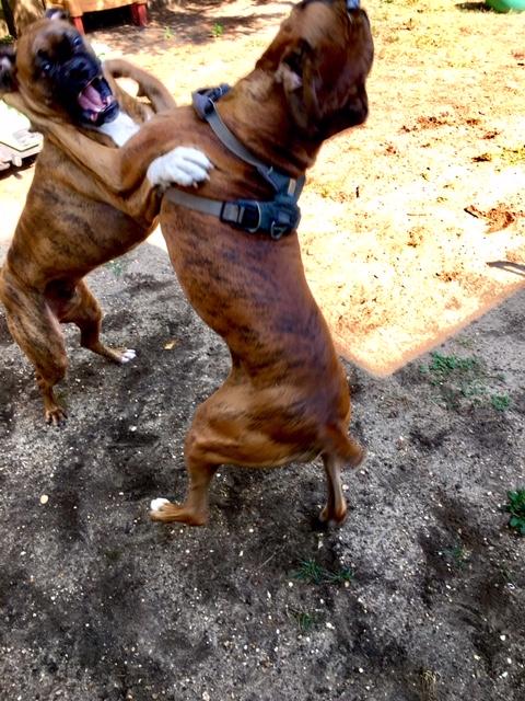 Doggie day care-img_6896.jpg
