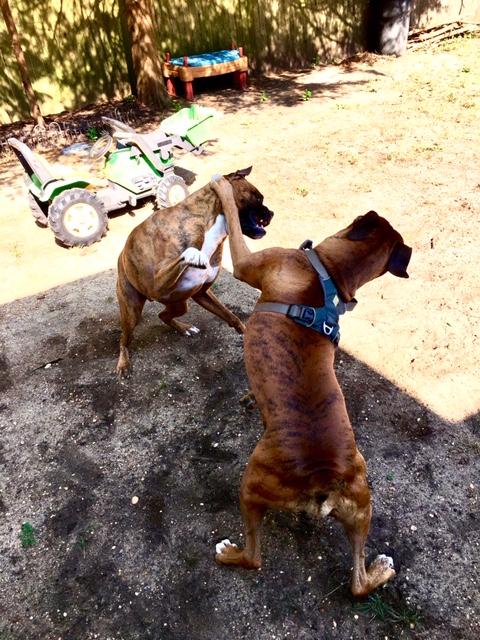 Doggie day care-img_6901.jpg