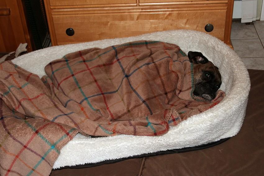 Pics of Sleeping Boxers Thread-img_9001.jpg