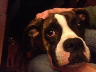 Jessie's Eye-jessie.jpg