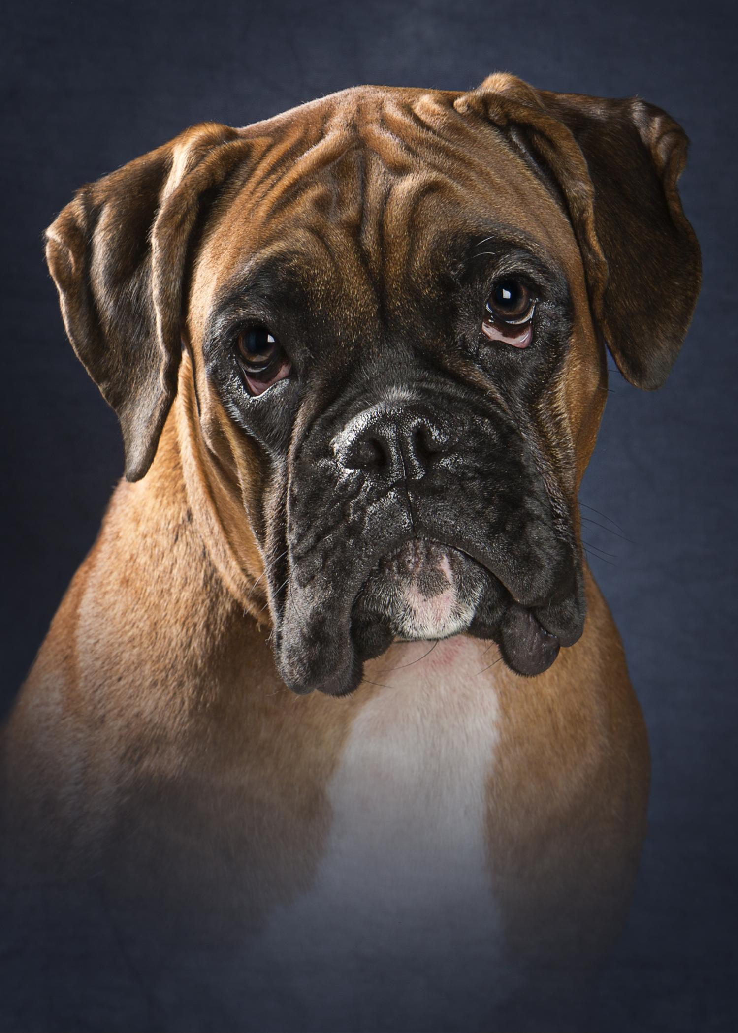 Waiting for our new boxer pup :)-karma-graduation-grade-1.jpg