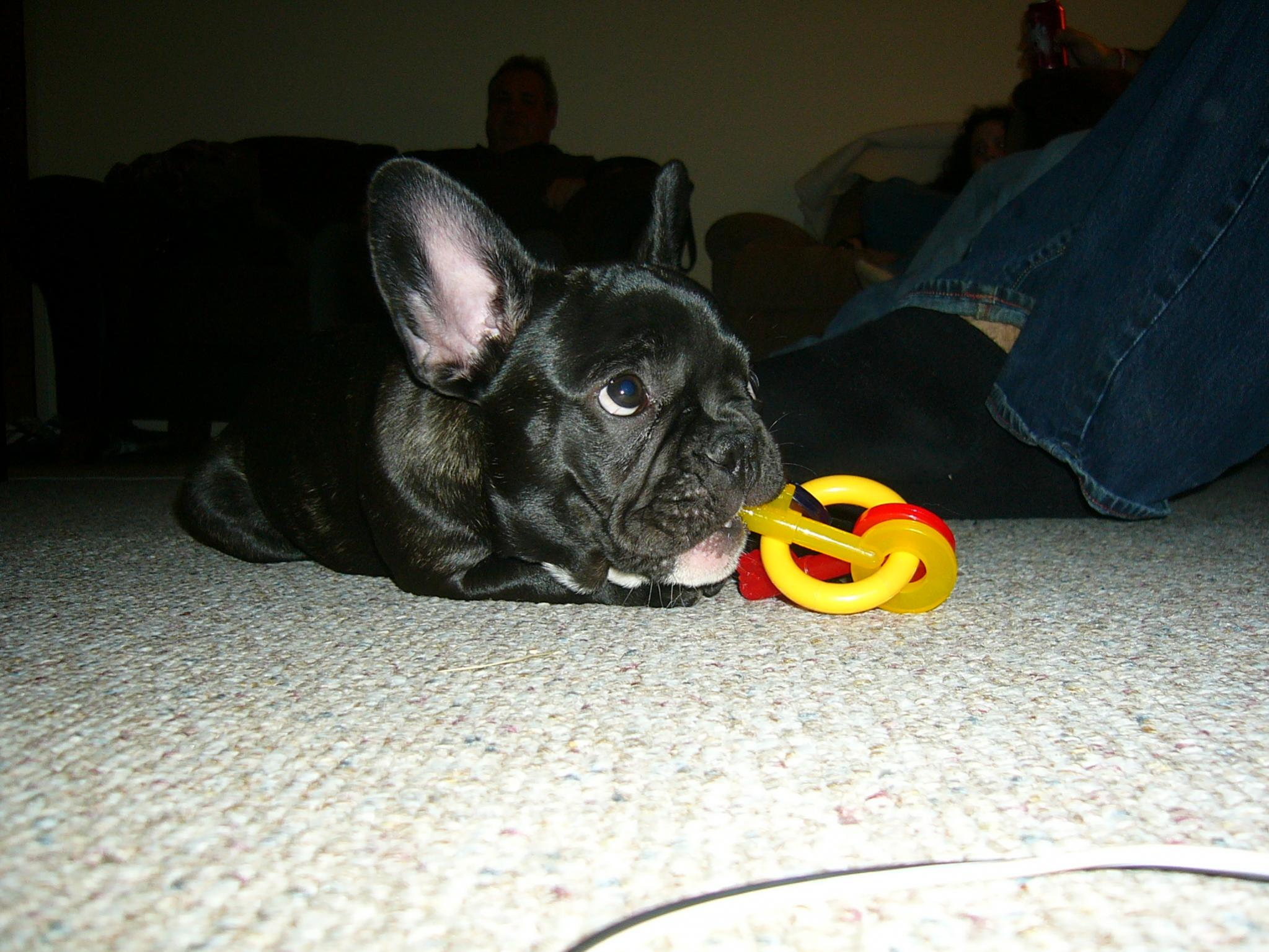 Meet Lexi!-p1050884.jpg