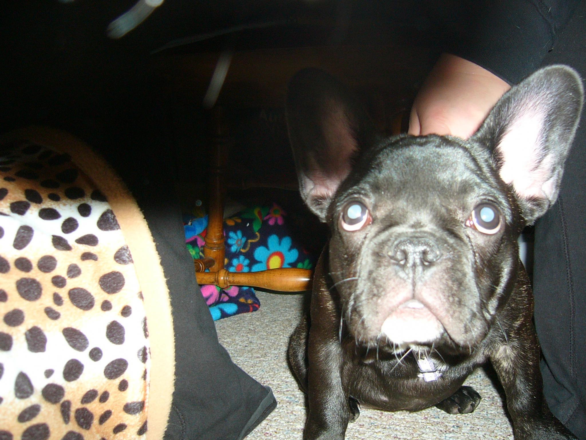 Meet Lexi!-p1050886.jpg