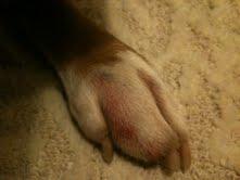 Swollen toe-paw1.jpg