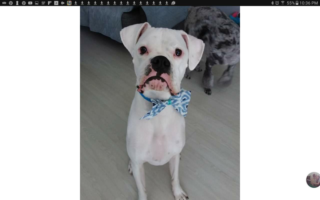 2nd dog in near future-screenshot_20170410-223610.png