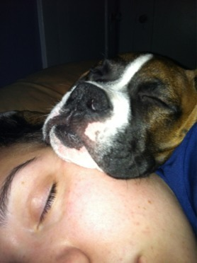 Pics of Sleeping Boxers Thread-sleeping.jpg