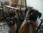 Buster, Boomer, and Haley 010.JPG
