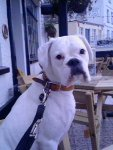 30th march newquay pub orig.jpg